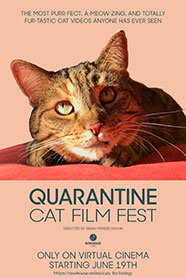 QUARANTINE CAT FILM FESTIVAL movie poster